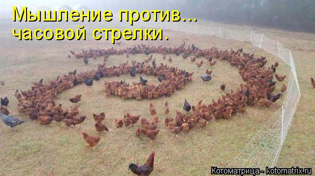 kotomatritsa_Ww (640x359, 254Kb)