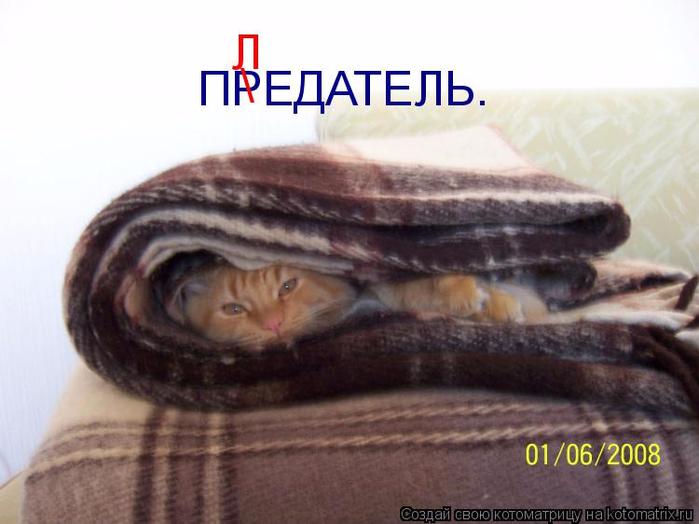 kotomatritsa_y (700x524, 273Kb)