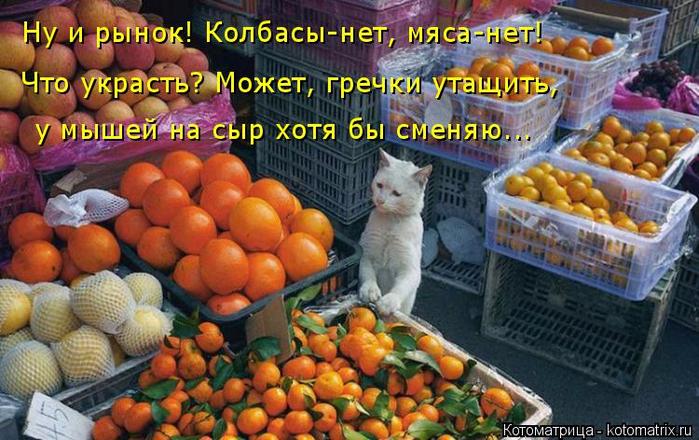 kotomatritsa_ce (700x440, 421Kb)