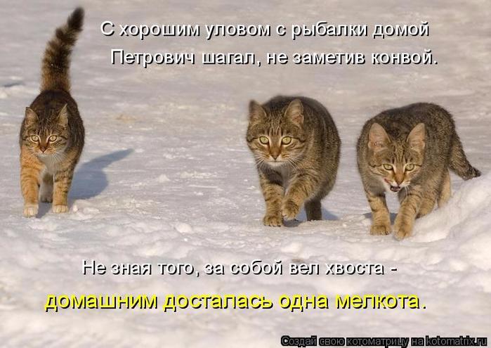 kotomatritsa_d (700x495, 318Kb)