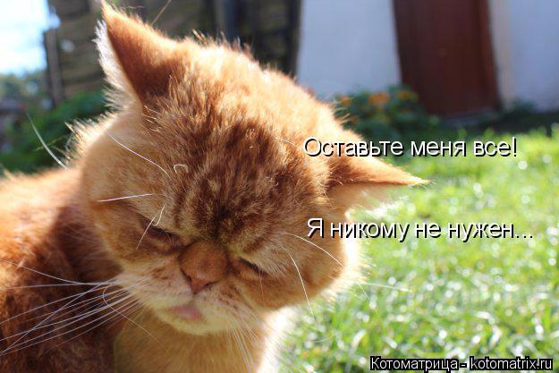 kotomatritsa_H (625x417, 266Kb)