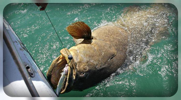крупная рыба (700x387, 116Kb)