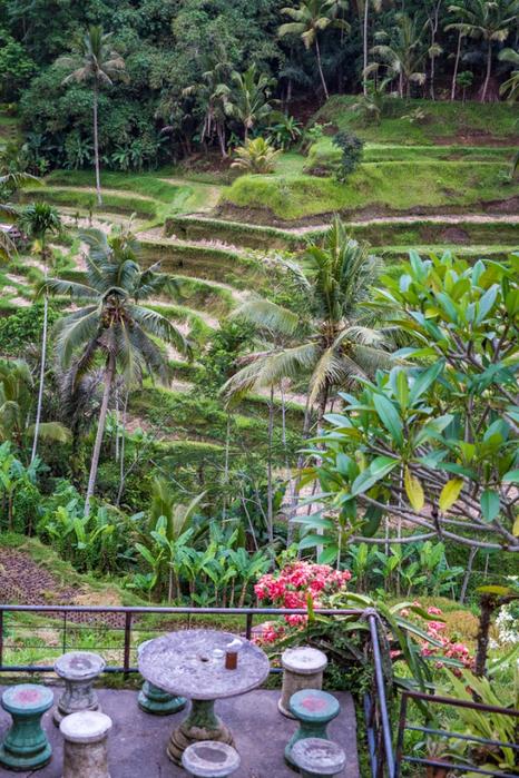 Bali-rice-field-V (466x700, 500Kb)