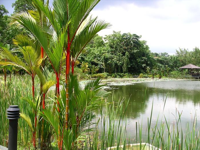 Symphony_Lake,_Singapore_Botanic_Gardens_-_20041025 (700x525, 170Kb)