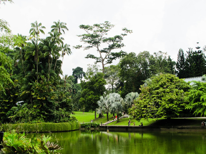 singapore-botanical-gardens-edited-8 (700x525, 172Kb)