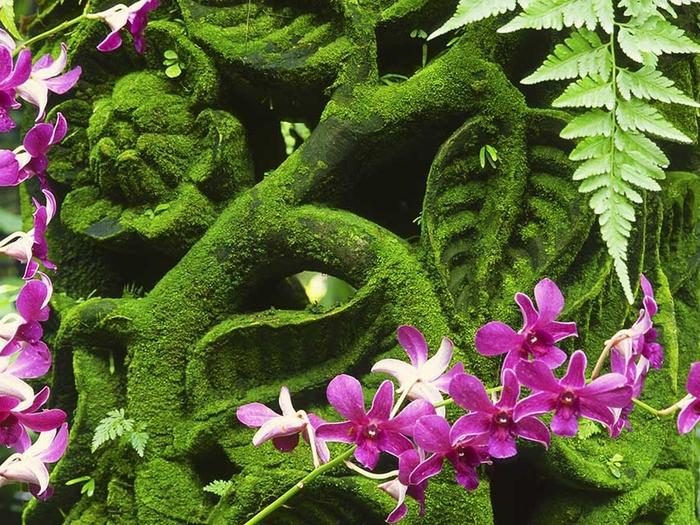 Singapore-Botanic-Gardens-dreamstime_l_4518143 (700x525, 375Kb)
