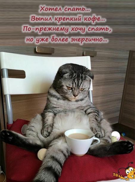 кот кофе (454x615, 200Kb)