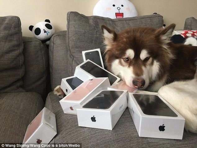 ������ ������� ����� ������ ������ iPhone 7 1 (634x476, 233Kb)