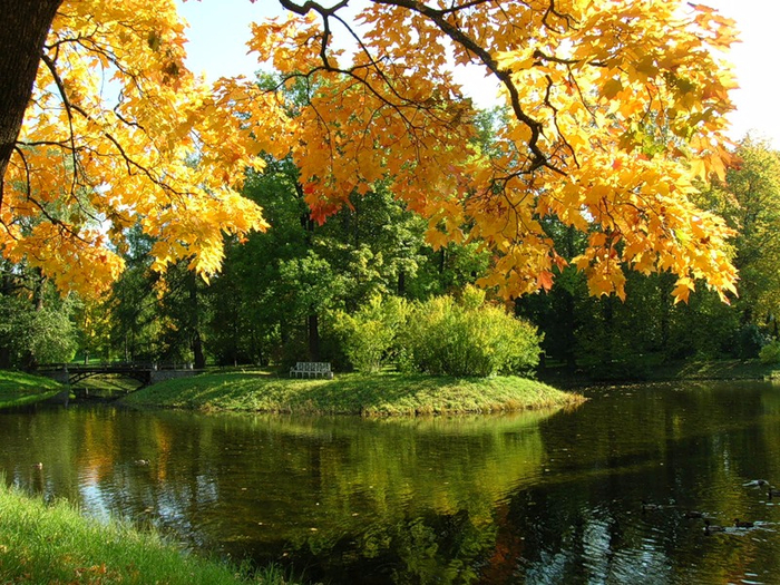 Осень в пушкине