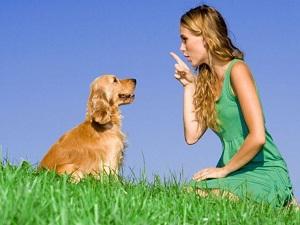 собака слушается на аватар (300x225, 27Kb)