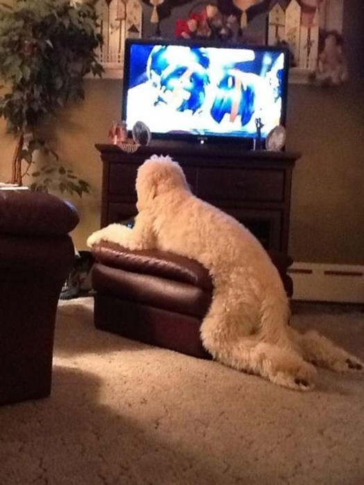 Чем занят пес, когда хозяев нет дома   фотографии