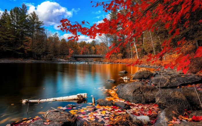 beautiful-nature-fall-wallpaper-2 (700x437, 182Kb)