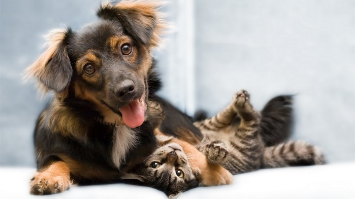 Funny-Cat-and-Dog-Friendship-8 (700x393, 64Kb)