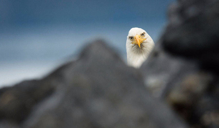 2016-Comedy-Wildlife-Photography-Awards-Winners-4-900x526 (700x409, 172Kb)