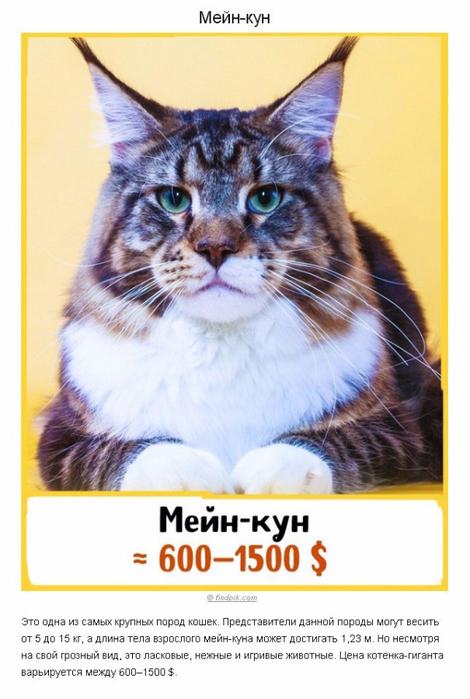 10 шикарных кошек, которые стоят целое состояние (470x700, 281Kb)