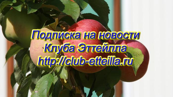 5178252_0001_11 (700x393, 164Kb)