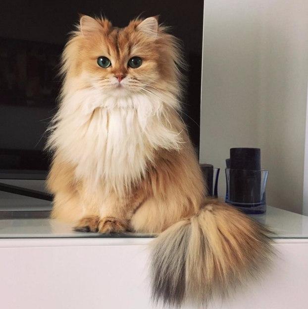Встречайте Смузи — самую фотогеничную кошку на свете (622x624, 211Kb)