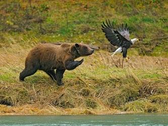 Медведь (333x250, 51Kb)