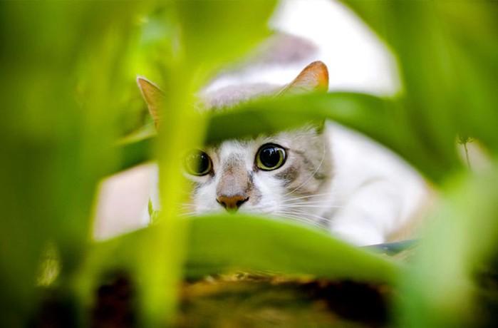 Как выглядит наш мир глазами животных: особенности зрения собак, кошек, насекомых, птиц и других существ
