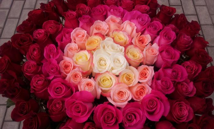 Белые розы, белые розы, беззащитны шипы… Красота роз завораживает.