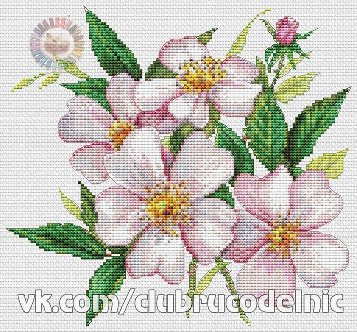 Цветы (700x650, 624Kb)