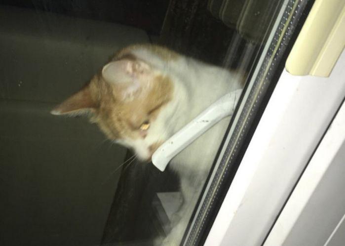 кот закрыл хозяйку на балконе
