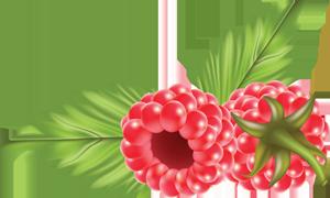 raspberry_PNG5072 (300x180, 64Kb)