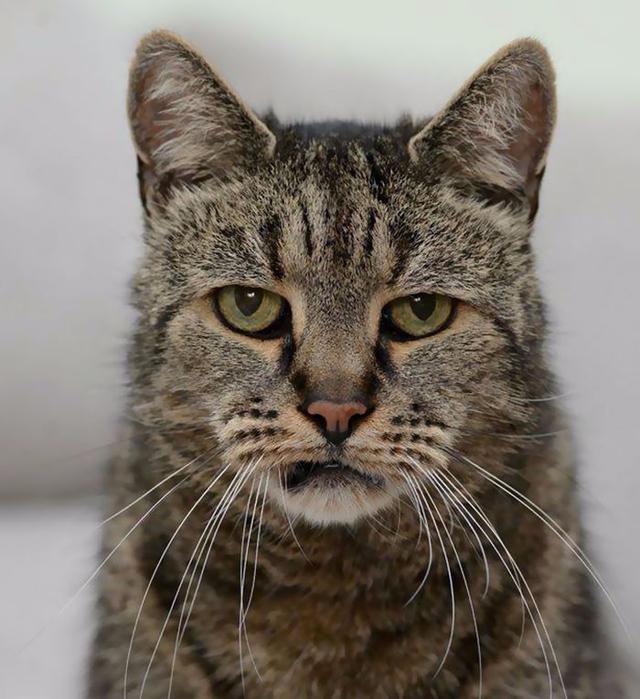 самый старый кот в мире 4 (640x700, 371Kb)