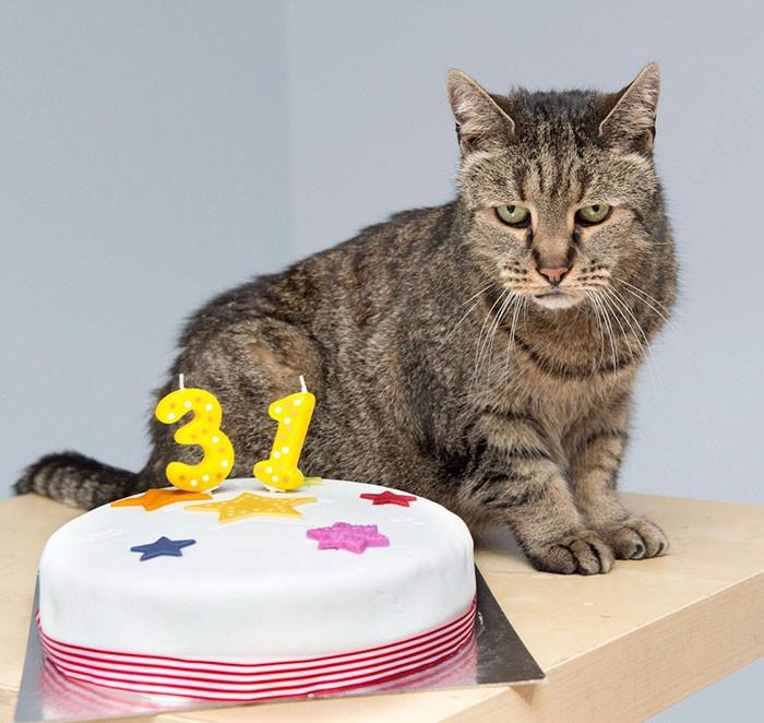самый старый кот в мире 6 (700x662, 289Kb)