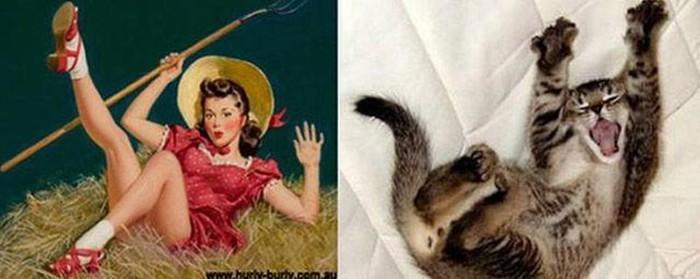 Забавные животные пародисты. Фотографии