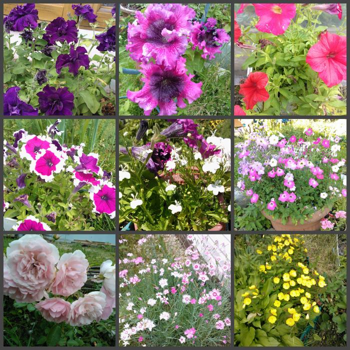 цветы лета (700x700, 917Kb)
