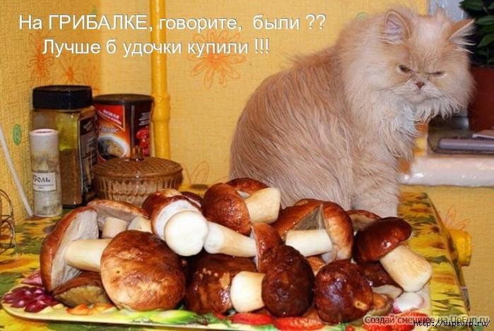 5745884_gribi_i_kot (700x469, 201Kb)