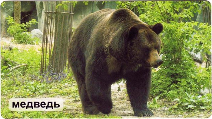 Mir_na_ladoshke_-_Na_lesnykh_tropinkakh-1 (700x395, 397Kb)