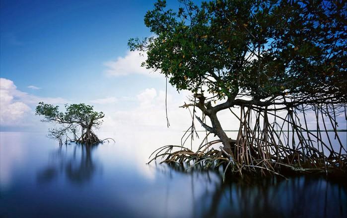 Уникальные красивые места на Земле, которые находятся под угрозой исчезновения