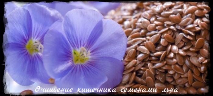 "alt=""Очищение кишечника семенами льна""/2835299_Ochishenie_kishechnika_semenami_lna (700x317, 357Kb)"