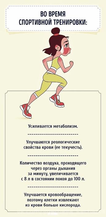 pochemu-nuzhno-zanimatsya-sportom-1 (344x700, 151Kb)