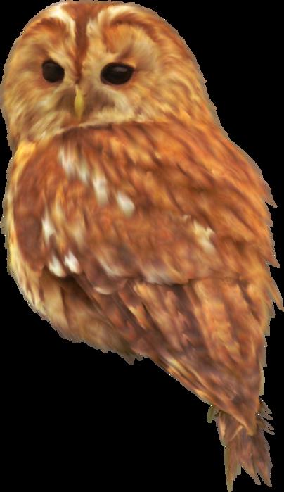 Collab_fallway_el (17) (404x700, 294Kb)