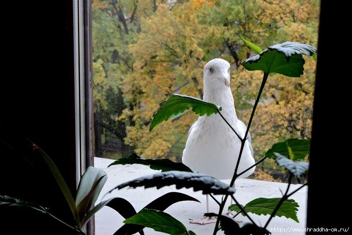 Чайка по имени Джонатан Ливингстон (1) (700x466, 235Kb)