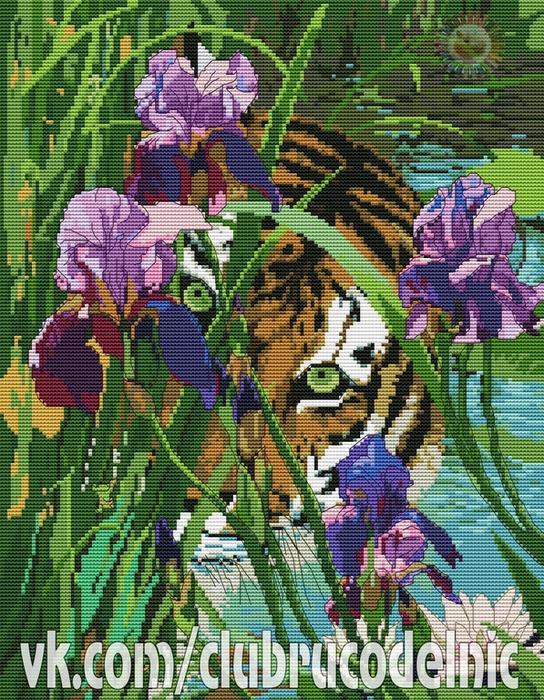 Tiger and Iris (544x700, 653Kb)