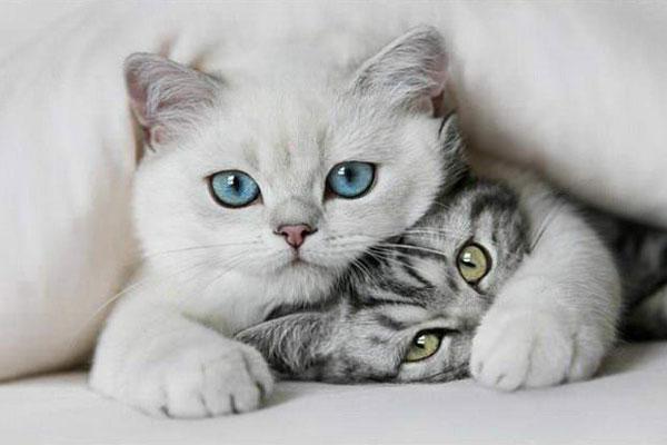 3400156_cat2 (600x400, 33Kb)