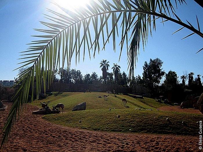 Биопарк в Валенсии   самый большой в Европе: фламинго, жирафы, слоны, носороги и другие