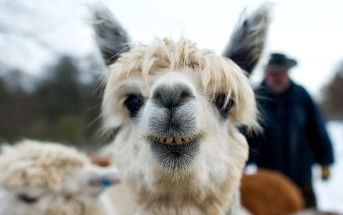 Памятные фото: Животные из выпусков новостей, о которых все говорят