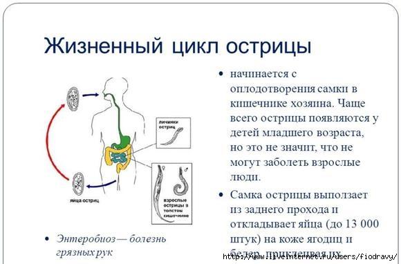 imagestabletki-ot-ostrits-u-vzroslyh-thumb (580x382, 100Kb)