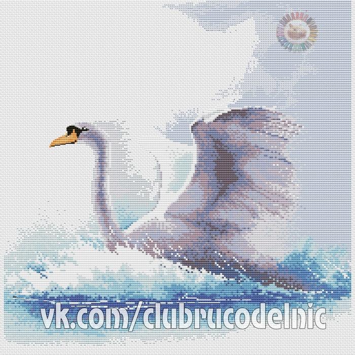 Swan in flight (700x700, 601Kb)
