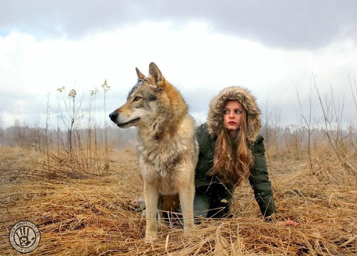 Животные гибриды, существующие в природе: зеброиды, волкособы и другие