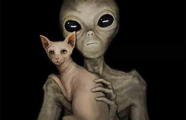 Коты и кошки - шпионы инопланетян