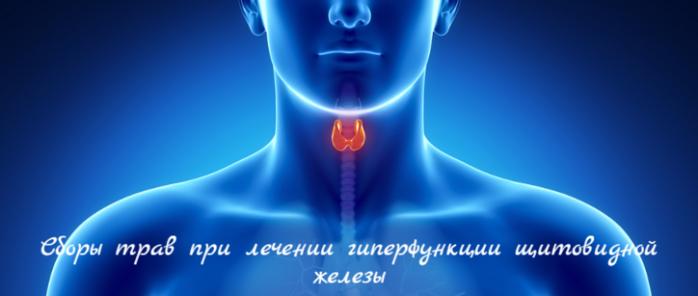 """alt=""""Сборы трав при лечении гиперфункции щитовидной железы""""/2835299__3_ (700x296, 250Kb)"""