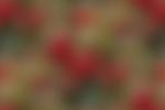 Превью 11979453-2 (600x401, 47Kb)