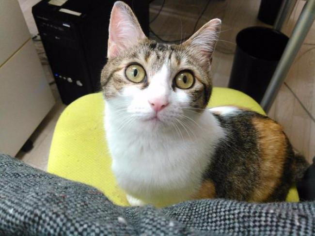 кошки в офисе 5 (650x487, 268Kb)