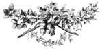 Превью 78846921_large_roses069 (700x348, 91Kb)